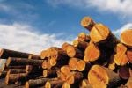 SEMINARIO IL REGOLAMENTO (UE) N.995/2010  - TIMBER REGULATION